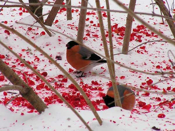 Создание зимнего ландшафта - это особый вид творчества
